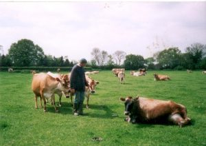 Eddie with Cows