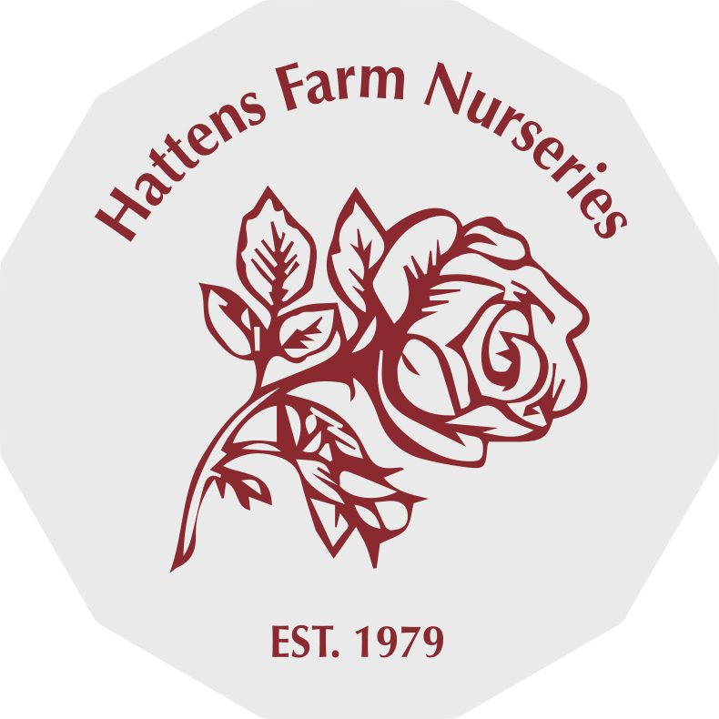 hattens farm nurseries metfield